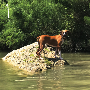 First America Homes dog Lulu